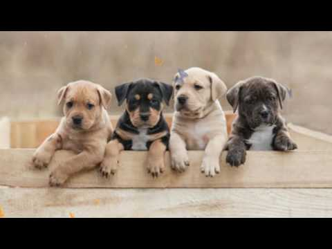 Most dangerous foods for dogs commonly found in your kitchen