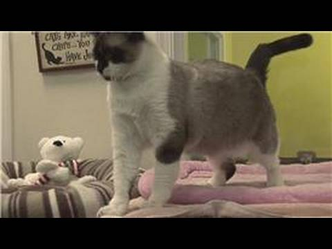 Pet care : why your cat won't use the litter box
