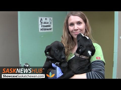 On the job with an animal shelter worker