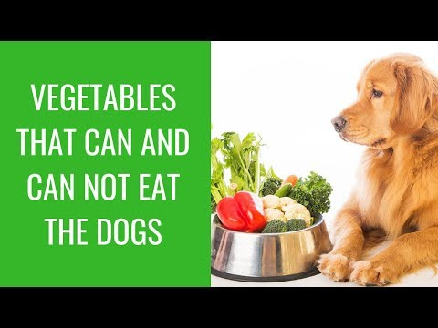 Vegetables that can and can not eat the dogs