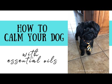 How to calm your dog with essential oils * calming oils for dogs
