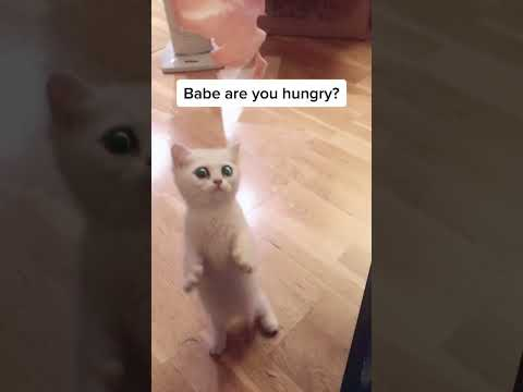"""🔴my cat is saying """"i'm hungry."""" #shorts"""