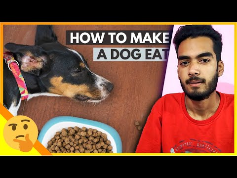 Why my dog is not eating food? what should i do to make a dog eat!