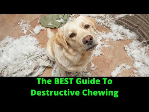 How to stop destructive chewing in dogs