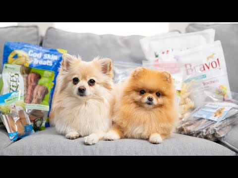 Best dog treats and chews for small dogs