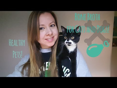 Diy bone broth - healthy diet for dogs and cats