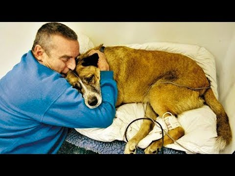 Try not to cry - emotional moments owners say goodbye to their dying dog compilation