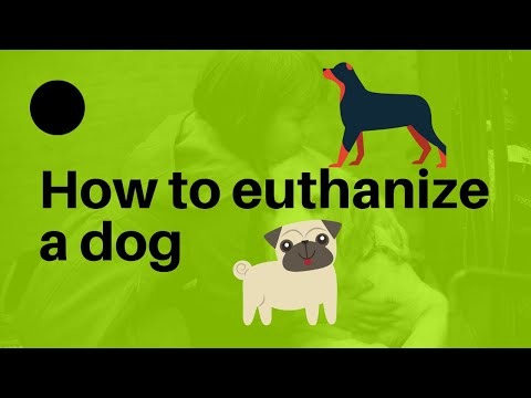Top 10 best way  how to euthanize a dog 
