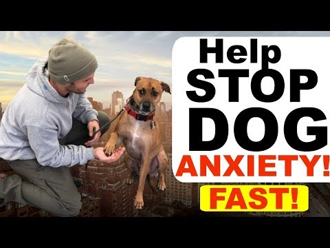 How to stop dog anxiety fast -dog anxiety training|fearful dog training tips!