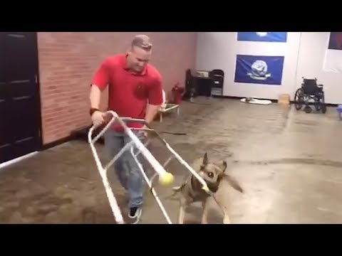 Dog isn't good at being a service dog