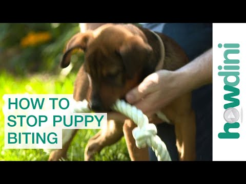 How to stop puppy biting: training puppies not to bite