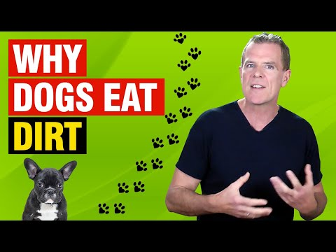 Why does my dog eat dirt? (5 reasons and how to stop it)
