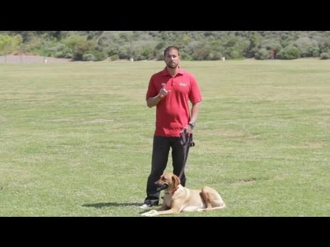 How to stop a male dog from marking at a female dog's house : dog behavior & training