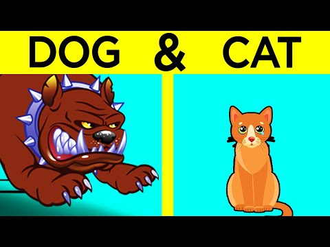 Cat vs dog - how to introduce cats to dogs