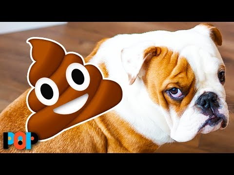 Why dogs eat their own poop