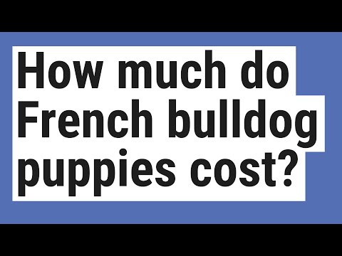 How much do french bulldog puppies cost?