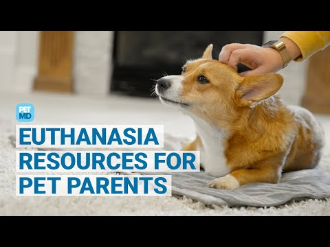 When is the right time to euthanize your pet?