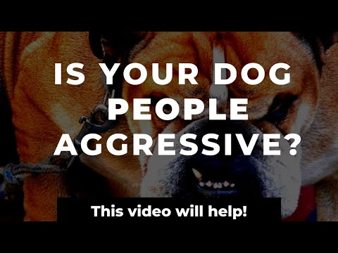 How to stop your dog's people aggression   training a people aggressive dog