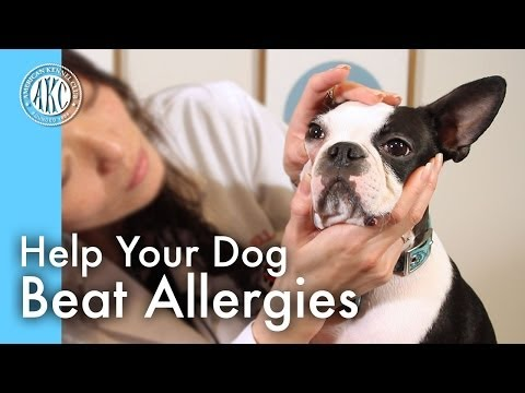 Help your dog beat allergies
