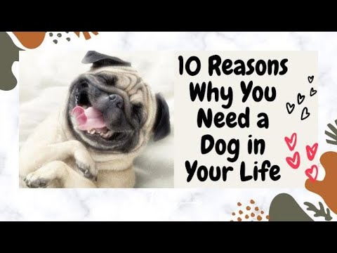 Top 10 reasons why you need a dog to jazz up your life
