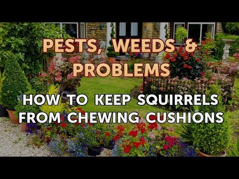 How to keep squirrels from chewing cushions