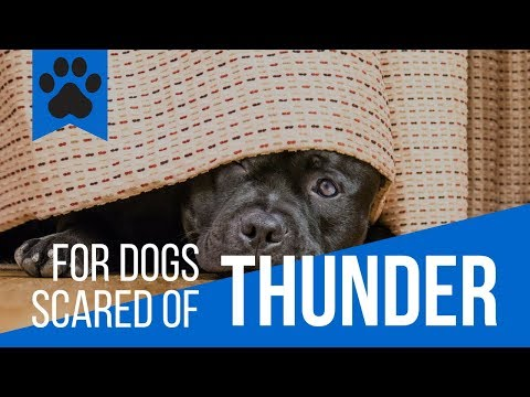 10 incredible tips if your dog is scared of thunder!