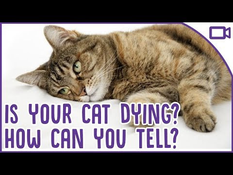 How to tell if your cat is dying and what to do