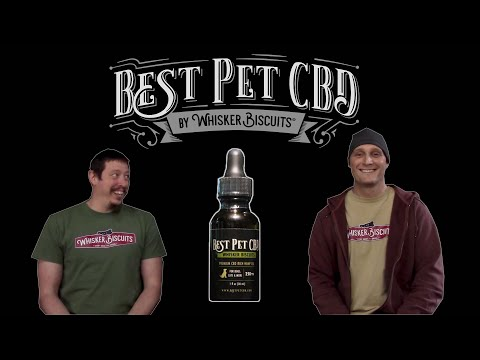 How do i give my dog cbd? quick guide to best methods.
