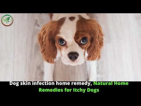 ✅ dog skin infection || home remedies for dog skin infection || skin problems in dogs treatment