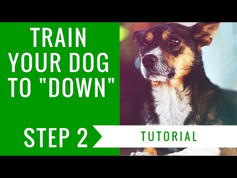 How to train your dog to down: step 2 tutorial