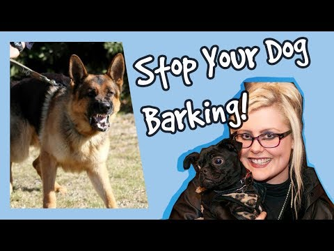 How to stop your dog barking at other dogs! stop dogs barking top tips! plus competition!