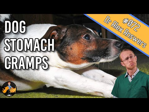 Dog stomach ache and cramps - serious or no worries? - dog health vet advice