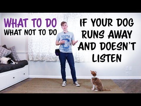 What to do and what not to do if your dog runs away and doesn't listen
