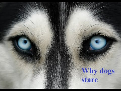 Ask amy: why does my dog stare at me