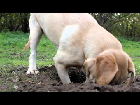 How do i stop my dog from digging?