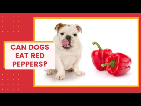 Can dogs eat red peppers? healthy or not?