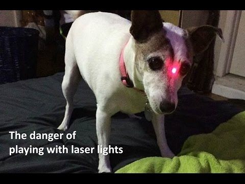 Dangers of using laser lights with dogs   the pooch coach