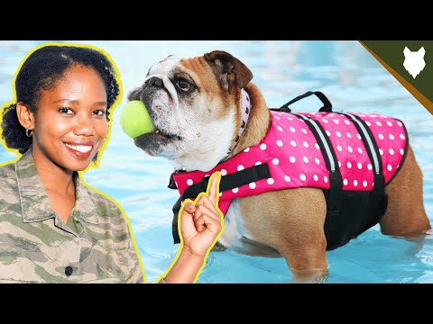 How much exercise does a english bulldog need?