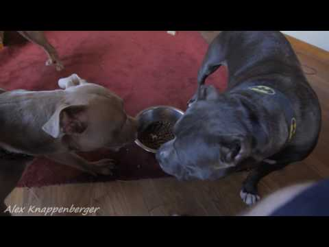 How to stop dog food aggression / resource gaurding