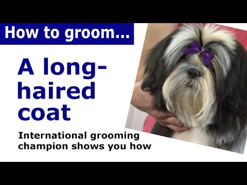 How to groom a long haired dog - dog grooming demonstration