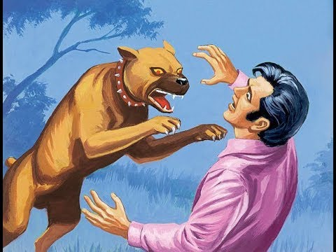 How to train your dog to attack - attack dog training tips