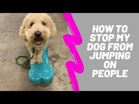 How to stop your dog from jumping on people.