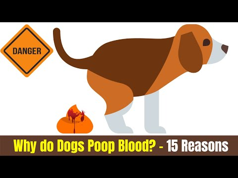 Why do dogs poop blood? (15 reasons of canine bloody stool)