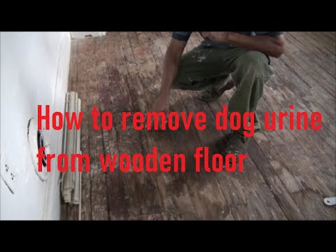 How to get rid of dog urine smell and stain from wood floor