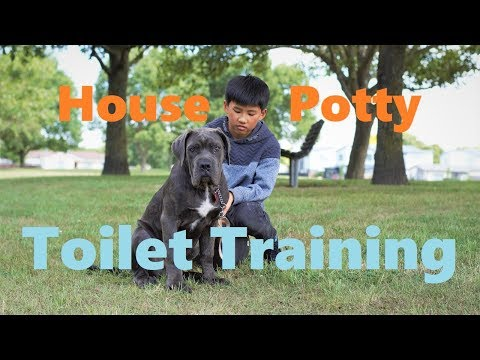 How to potty train a puppy - house toilet training.