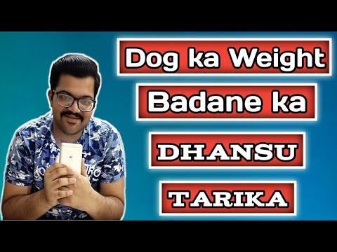 How to gain dog weight with home food and dog food | excellent diet plan | ofypets | #flexithegsd