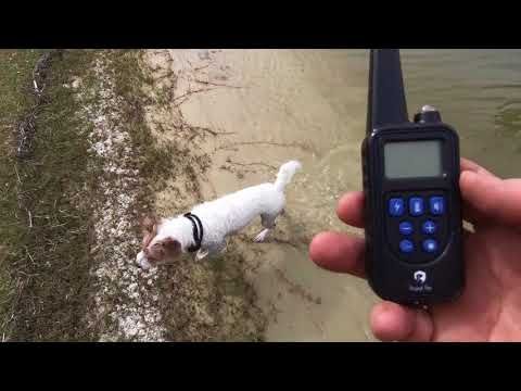 Royal pet electric dog training collar best live review