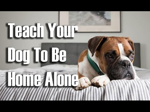 Teach your dog to be home alone - step-by-step - teach your dog to stay home alone without fear