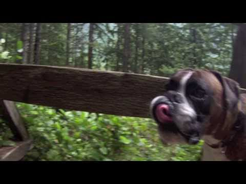 Boxer gio: hiking, cliff jumping