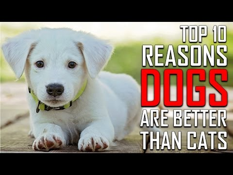 Top 10 reasons why dogs are better than cats